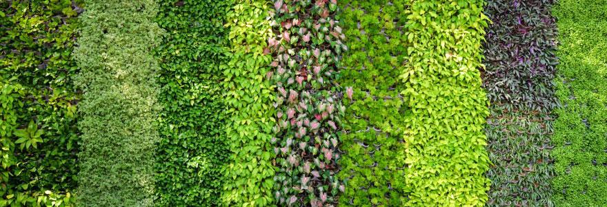 Les plantes appropriées pour un joli mur végétal